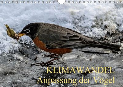 KLIMAWANDEL Anpassung der Vögel (Wandkalender 2019 DIN A4 quer), WIDO HOVILLE