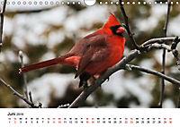 KLIMAWANDEL Anpassung der Vögel (Wandkalender 2019 DIN A4 quer) - Produktdetailbild 6