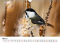 KLIMAWANDEL Anpassung der Vögel (Wandkalender 2019 DIN A4 quer) - Produktdetailbild 5