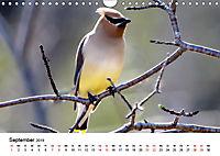 KLIMAWANDEL Anpassung der Vögel (Wandkalender 2019 DIN A4 quer) - Produktdetailbild 9