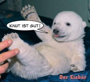Knut ist gut, Der Eisbär