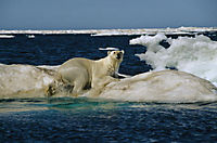 Königreich Arktis - Produktdetailbild 1