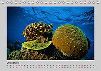 Korallen-Riffe Taucherträume (Tischkalender 2019 DIN A5 quer) - Produktdetailbild 2