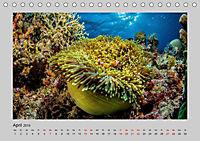 Korallen-Riffe Taucherträume (Tischkalender 2019 DIN A5 quer) - Produktdetailbild 1