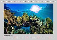 Korallen-Riffe Taucherträume (Tischkalender 2019 DIN A5 quer) - Produktdetailbild 12