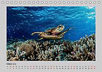 Korallen-Riffe Taucherträume (Tischkalender 2019 DIN A5 quer) - Produktdetailbild 3