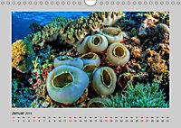 Korallen-Riffe Taucherträume (Wandkalender 2019 DIN A4 quer) - Produktdetailbild 1
