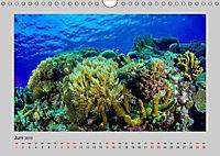 Korallen-Riffe Taucherträume (Wandkalender 2019 DIN A4 quer) - Produktdetailbild 6
