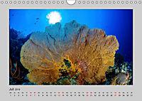 Korallen-Riffe Taucherträume (Wandkalender 2019 DIN A4 quer) - Produktdetailbild 7