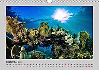 Korallen-Riffe Taucherträume (Wandkalender 2019 DIN A4 quer) - Produktdetailbild 9