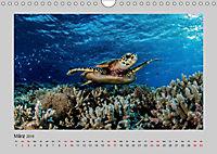 Korallen-Riffe Taucherträume (Wandkalender 2019 DIN A4 quer) - Produktdetailbild 3