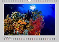 Korallen-Riffe Taucherträume (Wandkalender 2019 DIN A4 quer) - Produktdetailbild 2
