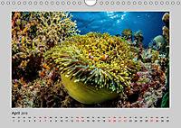 Korallen-Riffe Taucherträume (Wandkalender 2019 DIN A4 quer) - Produktdetailbild 4