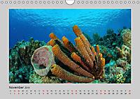 Korallen-Riffe Taucherträume (Wandkalender 2019 DIN A4 quer) - Produktdetailbild 11