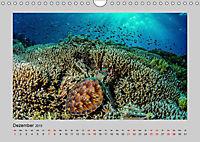 Korallen-Riffe Taucherträume (Wandkalender 2019 DIN A4 quer) - Produktdetailbild 12
