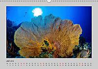 Korallen-Riffe Taucherträume (Wandkalender 2019 DIN A3 quer) - Produktdetailbild 7