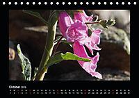 Korsika - Insel der Träume (Tischkalender 2019 DIN A5 quer) - Produktdetailbild 10
