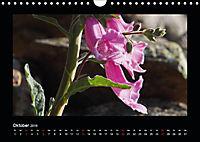 Korsika - Insel der Träume (Wandkalender 2019 DIN A4 quer) - Produktdetailbild 10