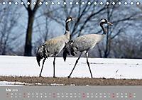 Kraniche in Vorpommern (Tischkalender 2019 DIN A5 quer) - Produktdetailbild 5
