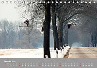 Kraniche in Vorpommern (Tischkalender 2019 DIN A5 quer) - Produktdetailbild 1