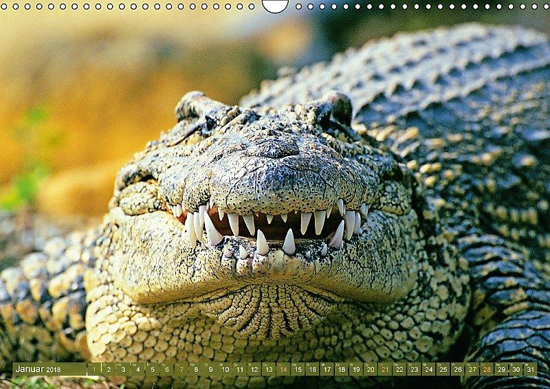 krokodile gef hrliches grossmaul wandkalender 2018 din a3 quer kalender bestellen. Black Bedroom Furniture Sets. Home Design Ideas
