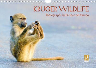KRUGER WILDLIFE (Wall Calendar 2019 DIN A4 Landscape), Enrique del Campo
