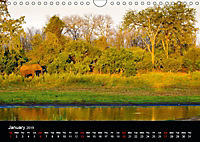 KRUGER WILDLIFE (Wall Calendar 2019 DIN A4 Landscape) - Produktdetailbild 1