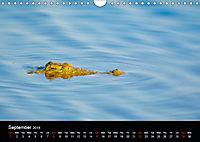 KRUGER WILDLIFE (Wall Calendar 2019 DIN A4 Landscape) - Produktdetailbild 9