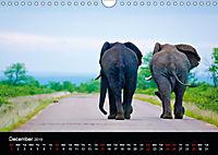 KRUGER WILDLIFE (Wall Calendar 2019 DIN A4 Landscape) - Produktdetailbild 12