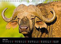 KRUGER WILDLIFE (Wall Calendar 2019 DIN A4 Landscape) - Produktdetailbild 7