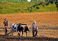 Kuba - Faszination pur (Wandkalender 2019 DIN A4 quer) - Produktdetailbild 10