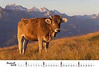 Kühe 2019 - Produktdetailbild 8