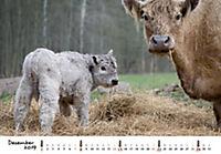 Kühe 2019 - Produktdetailbild 12