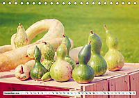 Kürbisse - so farbenfroh (Tischkalender 2019 DIN A5 quer) - Produktdetailbild 12