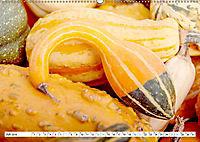 Kürbisse - so farbenfroh (Wandkalender 2019 DIN A2 quer) - Produktdetailbild 7
