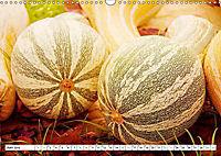 Kürbisse - so farbenfroh (Wandkalender 2019 DIN A3 quer) - Produktdetailbild 8