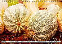 Kürbisse - so farbenfroh (Wandkalender 2019 DIN A4 quer) - Produktdetailbild 6