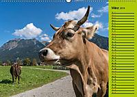 Kuh for you (Wandkalender 2019 DIN A2 quer) - Produktdetailbild 3