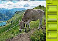Kuh for you (Wandkalender 2019 DIN A2 quer) - Produktdetailbild 6