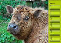 Kuh for you (Wandkalender 2019 DIN A2 quer) - Produktdetailbild 7