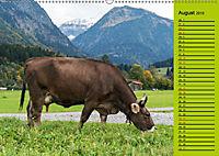 Kuh for you (Wandkalender 2019 DIN A2 quer) - Produktdetailbild 8