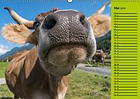 Kuh for you (Wandkalender 2019 DIN A2 quer) - Produktdetailbild 5