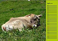 Kuh for you (Wandkalender 2019 DIN A2 quer) - Produktdetailbild 4
