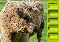 Kuh for you (Wandkalender 2019 DIN A2 quer) - Produktdetailbild 11