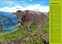 Kuh for you (Wandkalender 2019 DIN A2 quer) - Produktdetailbild 12