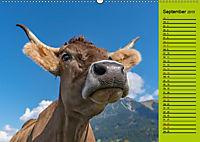 Kuh for you (Wandkalender 2019 DIN A2 quer) - Produktdetailbild 9