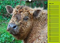 Kuh for you (Wandkalender 2019 DIN A3 quer) - Produktdetailbild 7