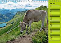Kuh for you (Wandkalender 2019 DIN A4 quer) - Produktdetailbild 6