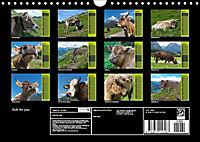 Kuh for you (Wandkalender 2019 DIN A4 quer) - Produktdetailbild 7