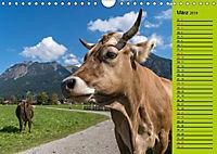 Kuh for you (Wandkalender 2019 DIN A4 quer) - Produktdetailbild 2